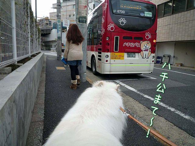きのうのお散歩_c0062832_178293.jpg