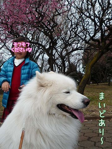 きのうのお散歩_c0062832_1784364.jpg