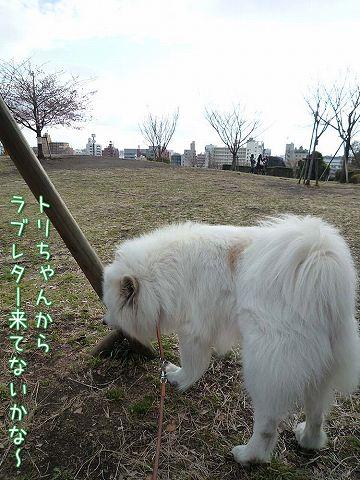 きのうのお散歩_c0062832_1784738.jpg