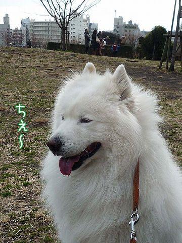 きのうのお散歩_c0062832_1785647.jpg