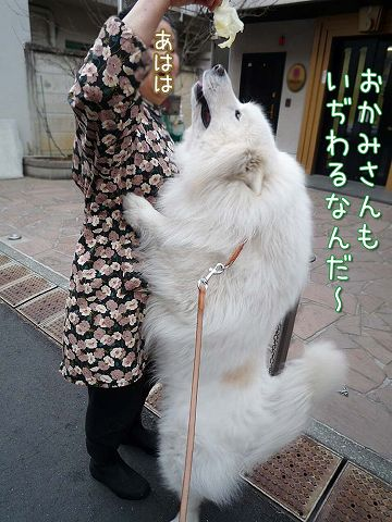 きのうのお散歩_c0062832_179155.jpg