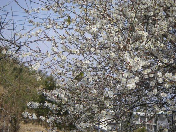 春の雨が降ったら「あめばらし」_e0181260_2043172.jpg