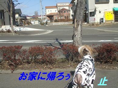 f0179203_1642182.jpg