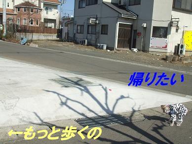 f0179203_164508.jpg