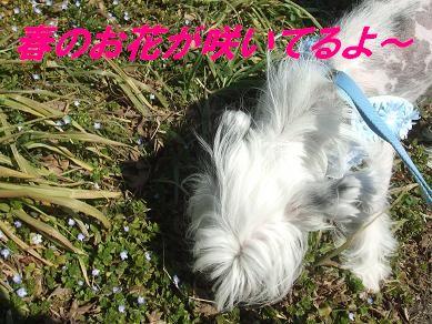 f0179203_16483498.jpg