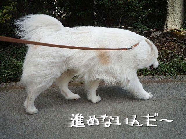 強風散歩_c0062832_1631291.jpg