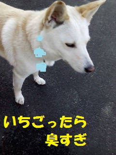 c0211642_16445441.jpg