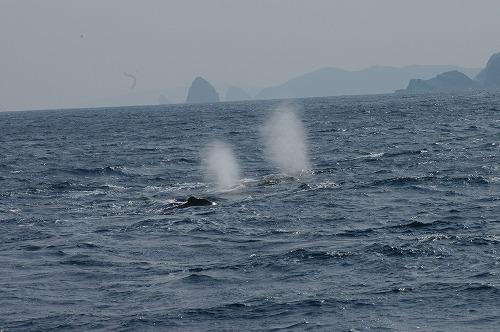 ケラマの海②_c0180460_18225498.jpg