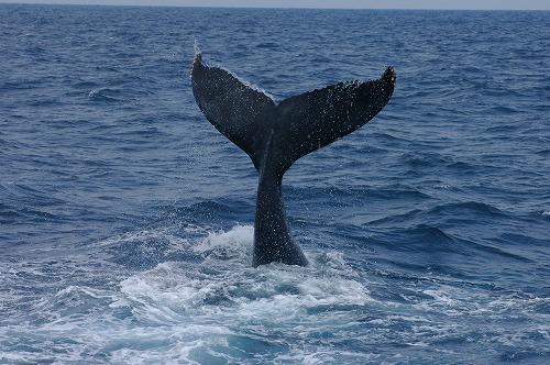 ケラマの海②_c0180460_19112420.jpg
