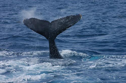 ケラマの海②_c0180460_1912108.jpg