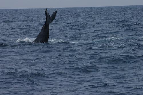 ケラマの海②_c0180460_19133890.jpg