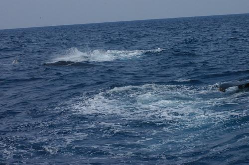 ケラマの海②_c0180460_19144764.jpg