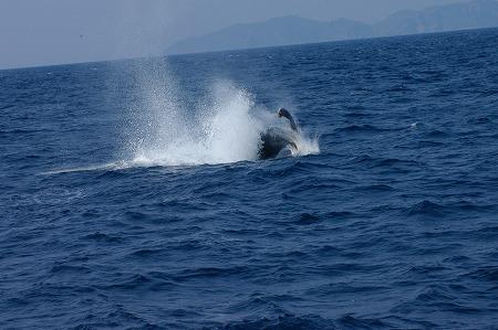 ケラマの海②_c0180460_1954199.jpg