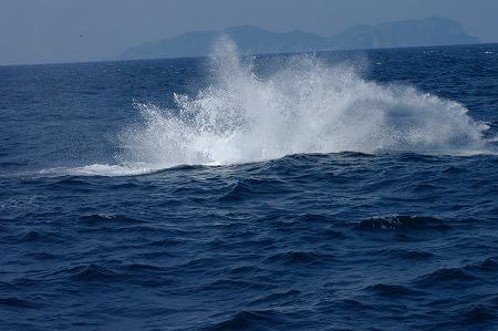 ケラマの海②_c0180460_1965562.jpg