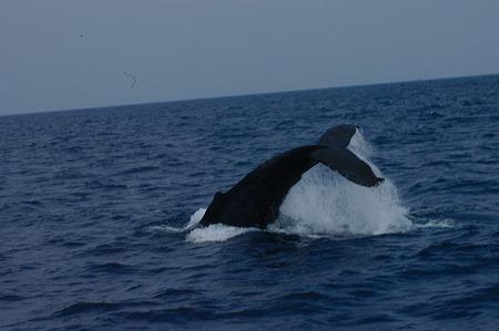 ケラマの海②_c0180460_1995473.jpg