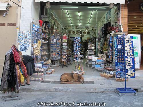 最年長の野良犬カネロは良い子_f0037264_22163862.jpg