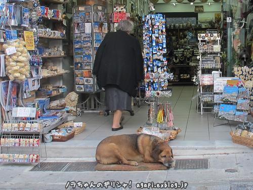 最年長の野良犬カネロは良い子_f0037264_22165714.jpg