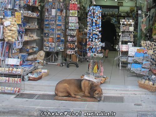 最年長の野良犬カネロは良い子_f0037264_2217202.jpg