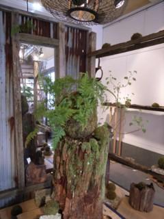NeZ en -鳥越隆志 植物展-_b0052772_18442166.jpg