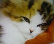 自由が丘 「猫カフェ」」にて_c0143684_2220366.jpg
