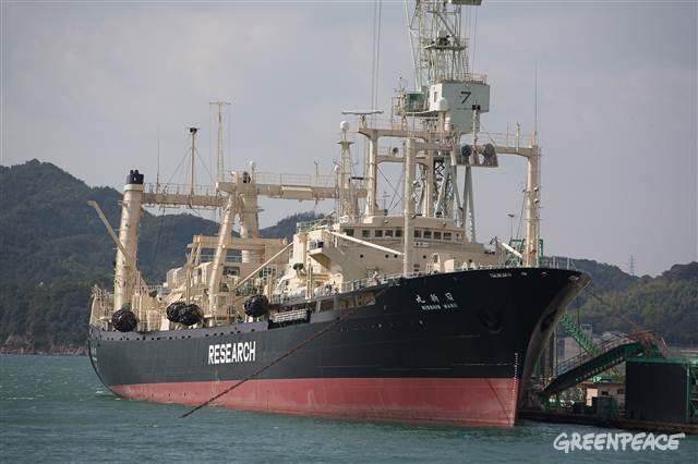 鯨肉が売れない、在庫がダブついて、が本当の理由!_e0105099_8512042.jpg