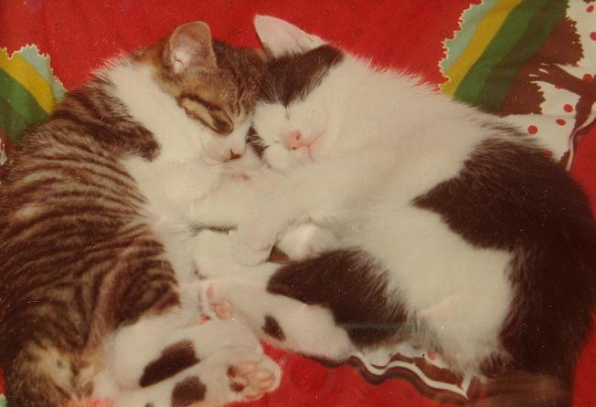 私が飼っていた猫たち_d0107834_15465121.jpg