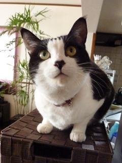 猫のお友だち じょあんちゃんはんくすちゃんくましーちゃん編。_a0143140_19274273.jpg