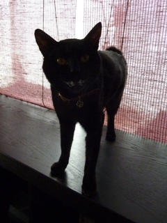 猫のお友だち じょあんちゃんはんくすちゃんくましーちゃん編。_a0143140_19281531.jpg