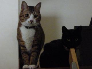 猫のお友だち じょあんちゃんはんくすちゃんくましーちゃん編。_a0143140_19323162.jpg