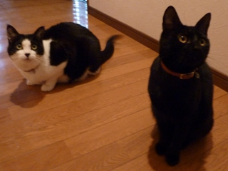 猫のお友だち じょあんちゃんはんくすちゃんくましーちゃん編。_a0143140_19331497.jpg