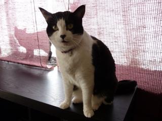 猫のお友だち じょあんちゃんはんくすちゃんくましーちゃん編。_a0143140_193330100.jpg