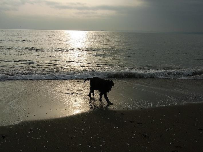 光の道、海の道_c0113755_1364989.jpg
