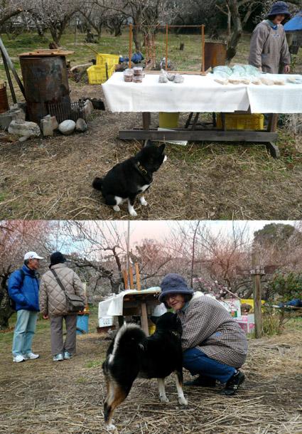 小田原梅まつり_e0236072_2011838.jpg