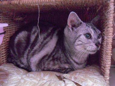 【ウィル】 迷い猫か捨て猫か_a0066779_19322090.jpg