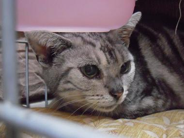 【ウィル】 迷い猫か捨て猫か_a0066779_19322565.jpg