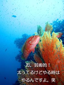 ダイビングマンといくシミランクルーズ_f0144385_117263.jpg