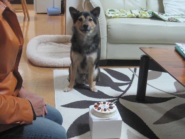 愛犬の誕生ケーキ・・・_f0202703_2214177.jpg