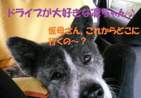 f0121712_1549324.jpg