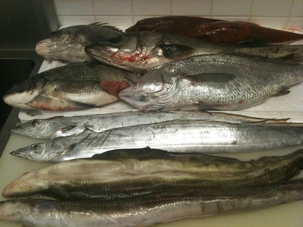 淡路島直送の魚 ④_e0210422_0304443.jpg