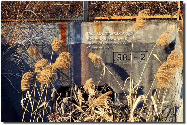 2011 冬の記憶 №17 ~荒野漂流~_f0235723_171018.jpg