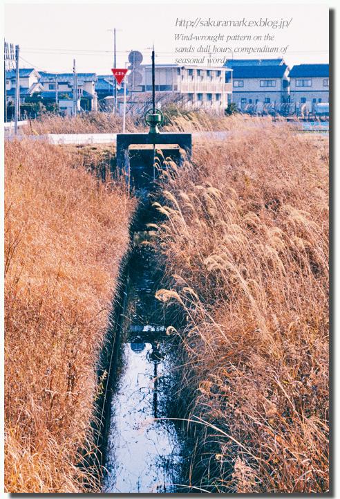 2011 冬の記憶 №17 ~荒野漂流~_f0235723_1773514.jpg