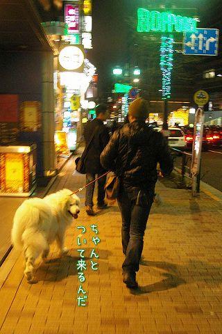 犬のいない犬の写真展_c0062832_20194913.jpg