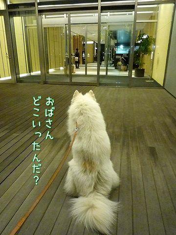 犬のいない犬の写真展_c0062832_20195463.jpg