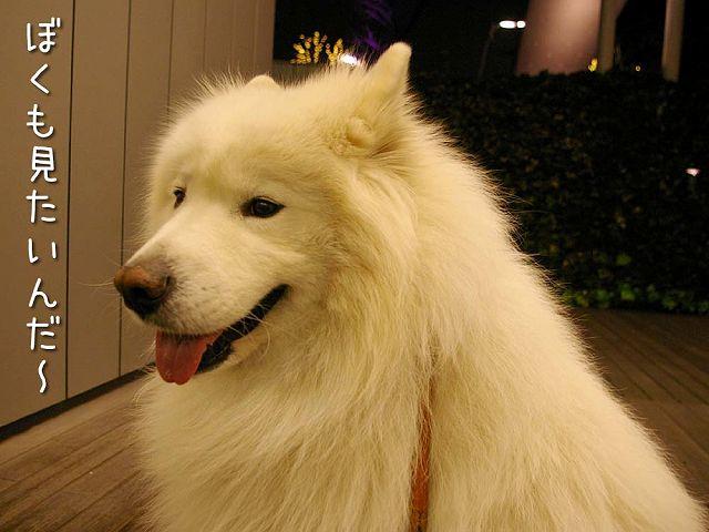 犬のいない犬の写真展_c0062832_20201242.jpg