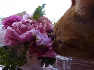 ピンク花猫 しぇる編。_a0143140_23374413.jpg