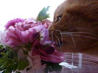 ピンク花猫 しぇる編。_a0143140_23381312.jpg