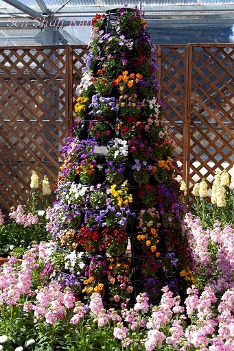 花の回廊「早春の草花展」_a0164068_16554686.jpg