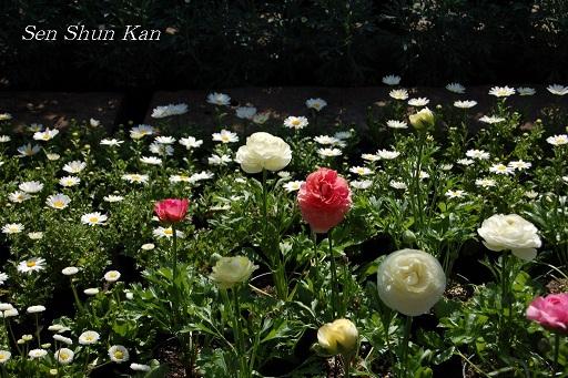 花の回廊「早春の草花展」_a0164068_16565239.jpg