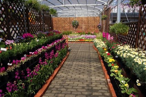 花の回廊「早春の草花展」_a0164068_16574063.jpg