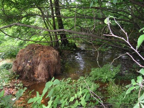 岩代清水の泉と池をめぐる21_a0087378_937185.jpg